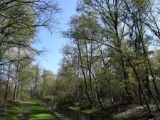 Kabinet gaat ontbossing aanpakken