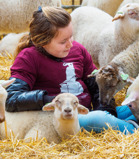 Lammetjesdag Loon op Zand: Op kraamvisite bij 1200 pasgeboren lammetjes