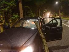 Vallende tak doorboort voorruit auto in Oosterhout, bestuurder met spoed naar het ziekenhuis