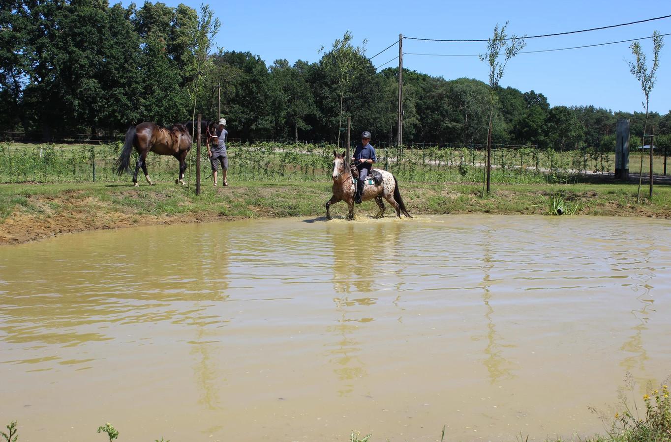 De paarden kunnen plonsen aan Stal Paepehoeve.