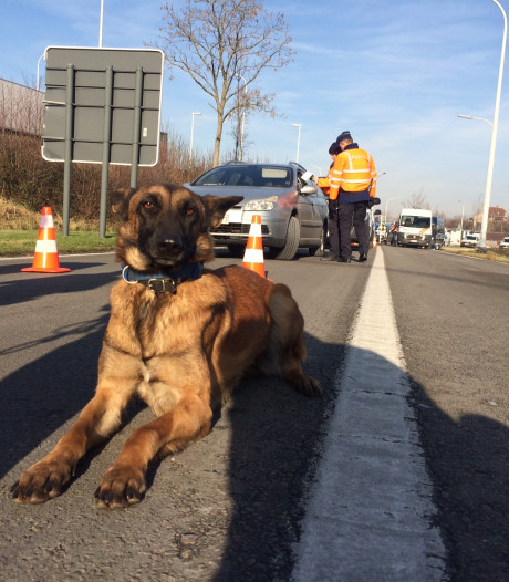Diverse inbreuken bij grote politiecontrole in Brugge