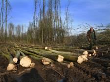 Neerijnen dreigt kwart bomen kwijt te raken