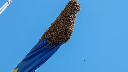Onderzoek spoorde al 200 bijensoorten in het Gewest