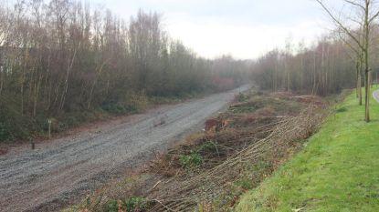 Bomen moeten wijken voor aanleg fietssnelweg in spoorwegbedding