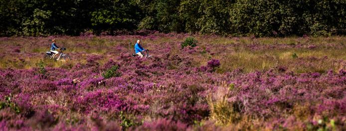 Heide in de buurt van Vierhouten.