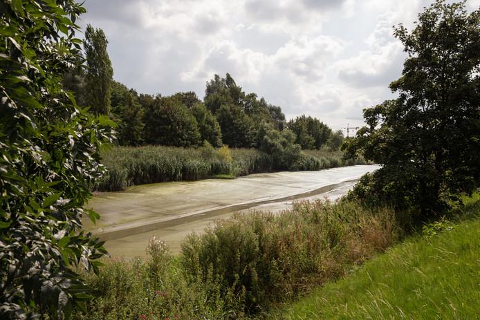 De Schelde in Gentbrugge. Het natte slib is de ideale habitat voor knijten, een soort kleine, zeer vervelende steekmuggen