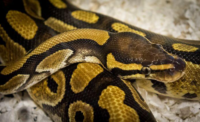 Een Python
