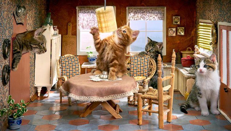 Beeld uit Poesjes, met vernieuwd decor en ongetrainde katten Beeld Jur Oster