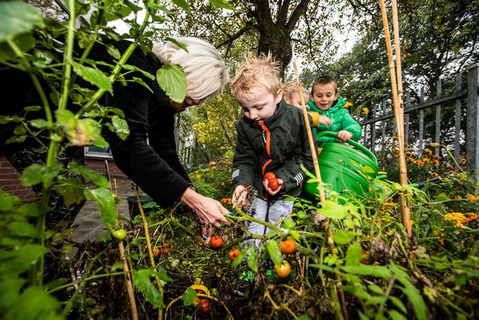Basisschool het Startblok heeft een schooltuin; foto van: Vincent (groene jas), Logan (gele jas, groen schort), Quint (donkere jas) en juf Angelique.