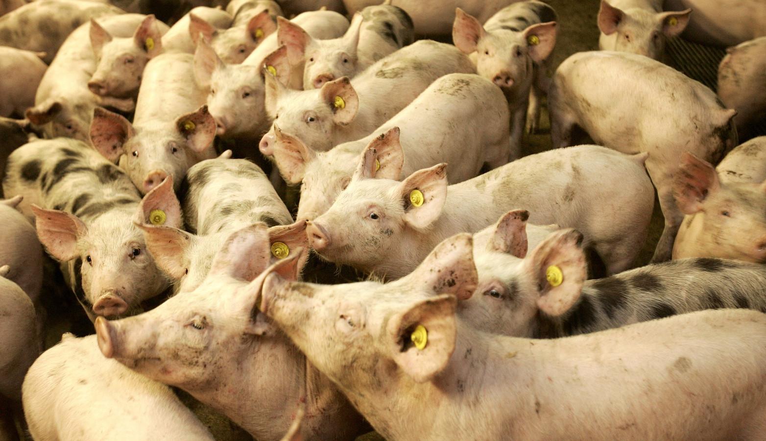 Putten kiest liever voor Food Valley dan ander samenwerkingsverband omdat de nabijgelegen gemeenten ook veel intensieve veehouderij kennen.