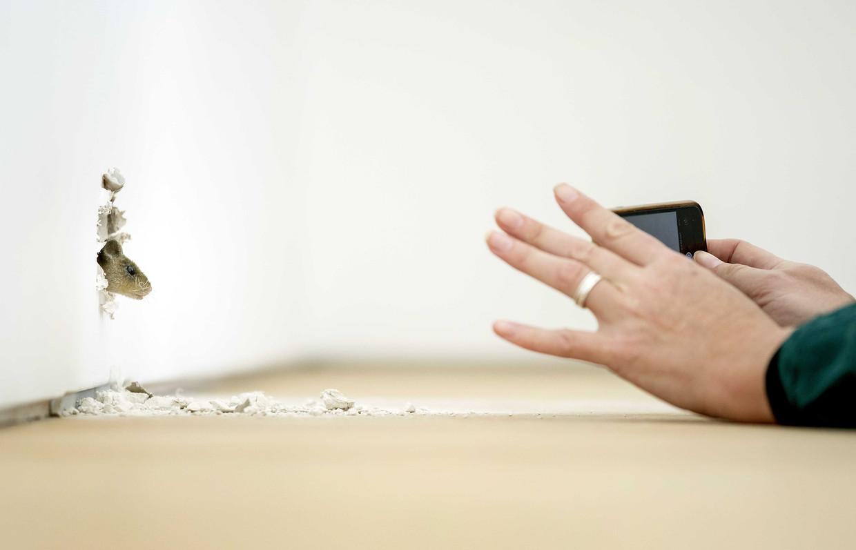 De sprekende muis van kunstenaar Ryan Gander in zijn eigen zaal in museum Voorlinden in Wassenaar.  Beeld Koen van Weel / ANP