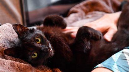 Kat die in oven werd gestopt heeft nieuwe thuis