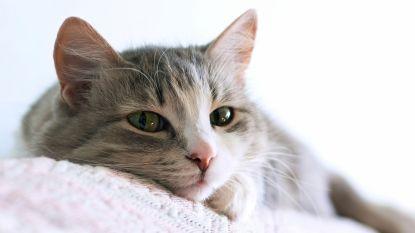 Waardebonnen om je kat te laten steriliseren vanaf 1 februari beschikbaar