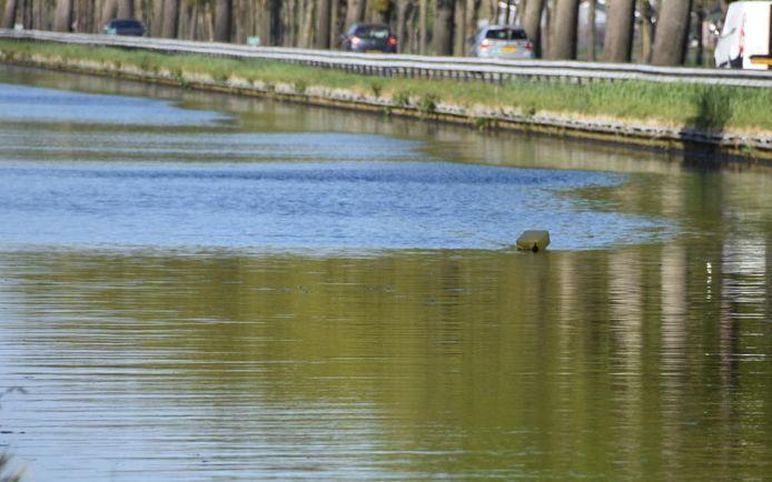 Met een drijver is een plek in het kanaal langs de N371 gemarkeerd waar mogelijk de auto is aangetroffen van de vermiste Limburger Loek Streukens. Duikers en een bergingsbedrijf zijn onderweg.