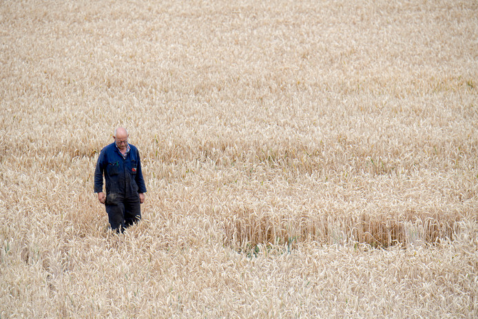 Loonwerker Jan de Goei in het veld bij Ophemert.