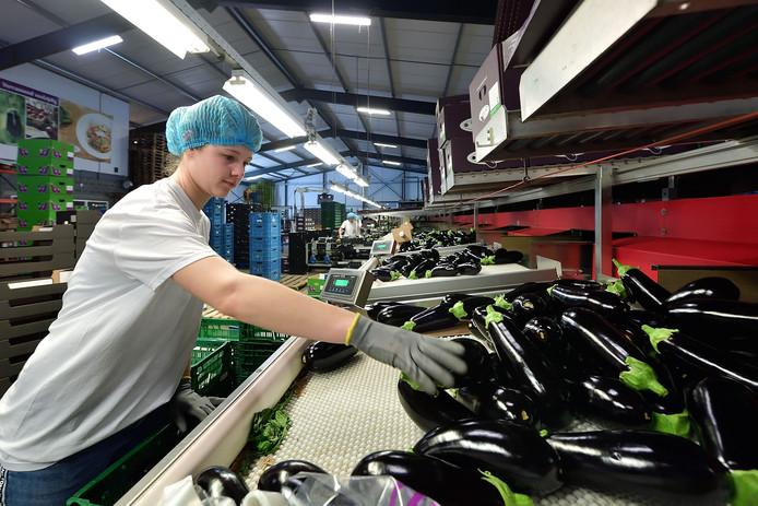 Noa Vrijenhoek werkt normaal gesproken in de horeca, maar is nu aan de slag bij een auberginekweker.