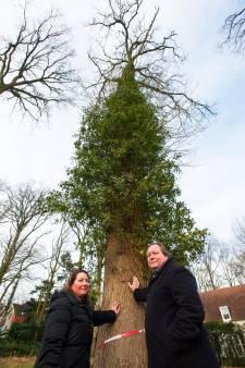 Goirle geeft het beschadigen van een boom in Dr. Keyzerlaan aan bij politie