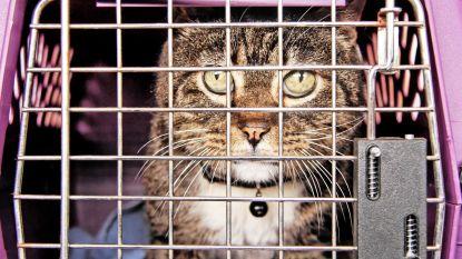 Politie vindt achtergelaten kat met briefje 'gratis mee te nemen'