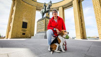Leer Nieuwpoort kennen door de ogen van hond Loeka