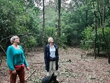 Boosheid bij Geffense Plas: bomen wijken voor vuurwerkshow van festival Fatality