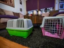 Brand Karel de Grotelaan: Kim neemt alle geëvacueerde huisdieren in huis