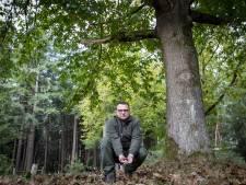 Letterzetter raast over Sallandse Heuvelrug: doodzieke fijnsparren leggen het loodje