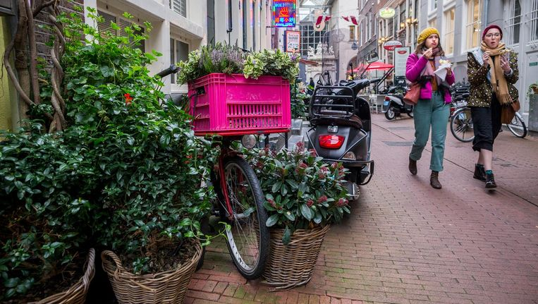 Kleine Amsterdamse oases: geveltuintjes in de Voetboogsteeg Beeld Rink Hof