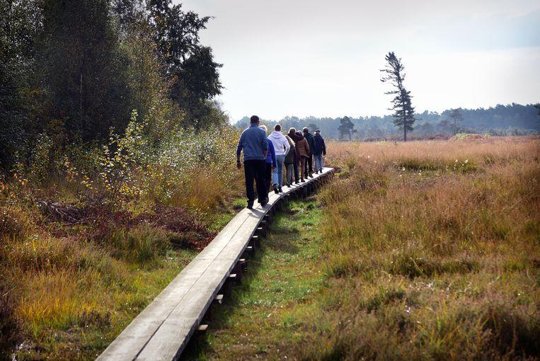 Het natuurgebied Wooldse Veen bij Winterswijk is een Natura 2000-gebied waar hydrologisch herstel plaats vindt. Het waterpeil wordt met damwanden aangepast. Beeld Marcel van den Bergh / de Volkskrant