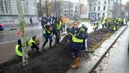 Eerste nieuwe bomen geplant op Frankrijklei