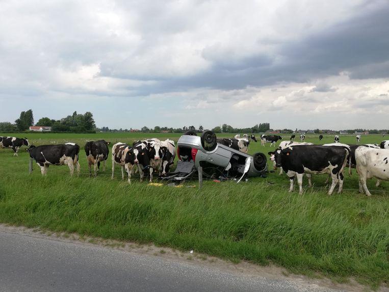 Woensdagnamiddag belandde een auto op zijn dak in een weiland. De koeien toonden massaal interesse.