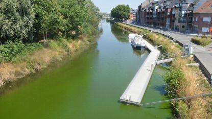 Opnieuw blauwalgenbloei in Dender: Watercaptatie, waterski en jetski tijdelijk verboden