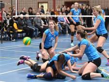Volleyballers van Volt kiezen voor Beers als thuisbasis: 'Simpelweg betere faciliteiten'