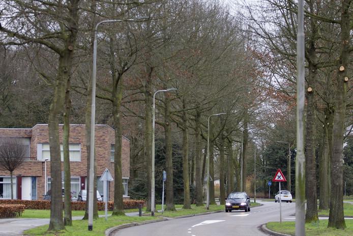 De wortels van de bomen langs de Santheuvel in Mierlo drukken de bestrating van het fietspad omhoog. Dat leidt tot gevaarlijke situaties.