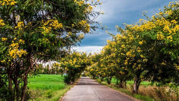 Une route en Thaïlande
