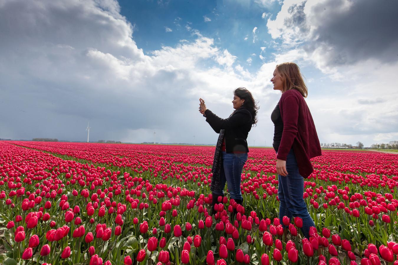 De eerste bezoekers van de Tulpenroute hebben hun weg naar de polder al gevonden.
