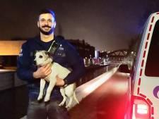 Inspecteurs vormen hangende mensenketting om hond uit water te redden