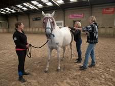 Paardenworkshop met oliën in Westervoort