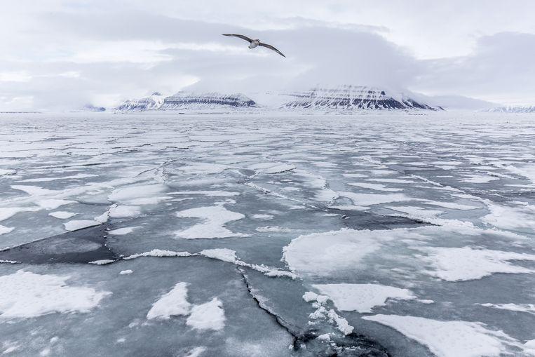 Het noordpoolgebied is afgelegen en kwetsbaar. Schepen in nood zijn vaak moeilijk te bereiken.  Beeld Eric Fokke