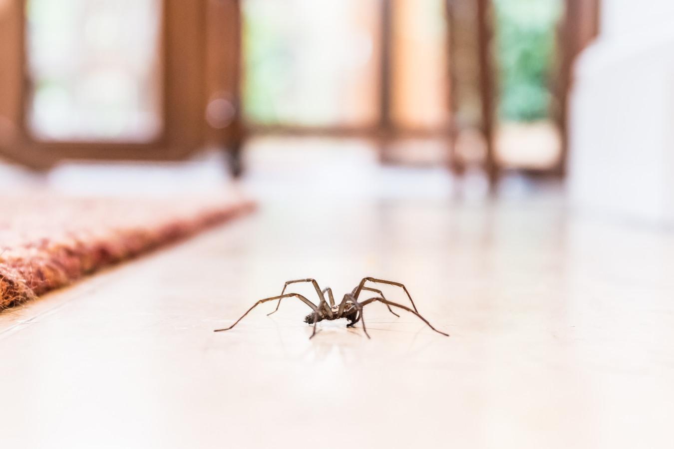 Een spin...