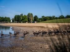 Er zijn veel te veel ganzen in Gelderland: miljoenenschade en poep tussen de tenen