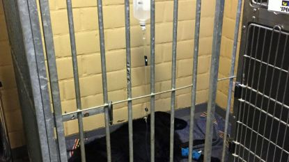 Honden vergiftigd na wandeling aan kasteel van Horst en in Lindenbos