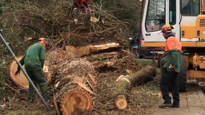 Gevaarlijke bomen naast Belselestraat worden gerooid
