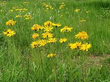 Staatsbosbeheer beschermt bijzonder plantje met hek