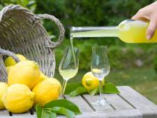 Deze Nederlandse limoncello is beter dan die van Italianen