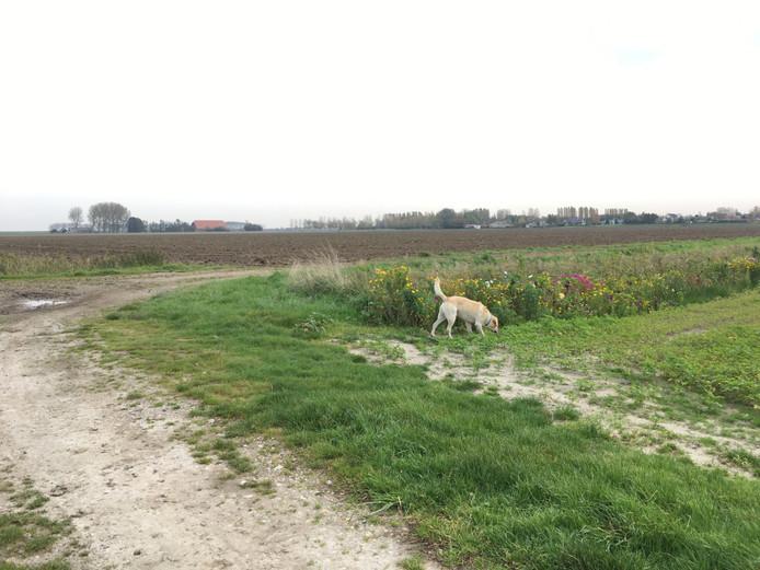 De hond van Eline ging gezellig mee joggen. Hij is laatst speciaal op conditiecursus geweest zodat hij rennen naast de fiets en mee gaan hardlopen beter vol kan houden.