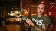 """SOS Reptiel in problemen door strengere adoptieregels: """"We moeten grotere locatie zoeken"""""""