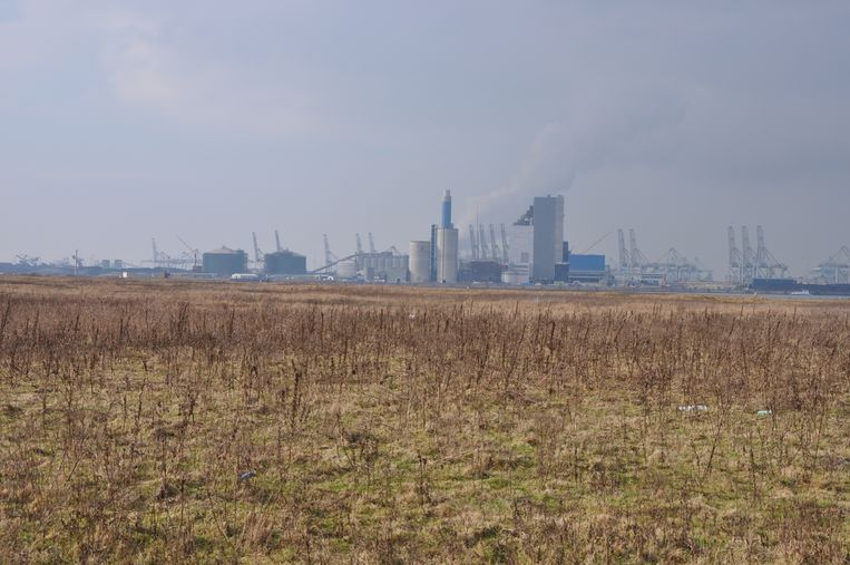 Het Amsterdamse havengebied. Beeld Arnold van Kreveld