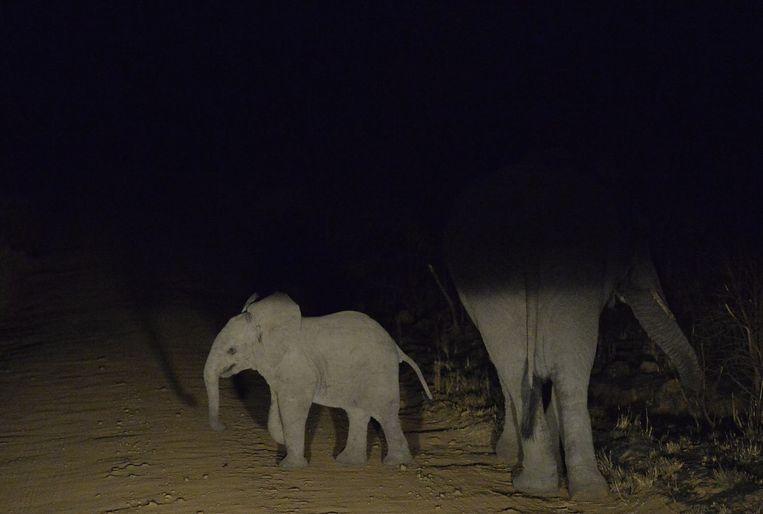 Een olifantenkalf en zijn moeder staan 's nachts op de weg in Pretoria, Zuid-Afrika. Beeld null
