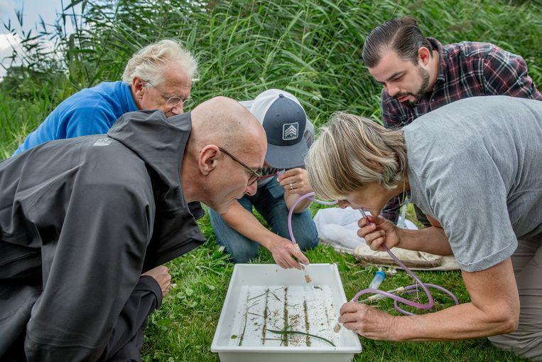 Zoeken naar interessante insecten. Links expeditieleider Menno Schilthuizen. Een collega-onderzoeker zuigt sluipwespen in een laboratoriumbuisje voor nader onderzoek. Beeld Jean-Pierre Jans