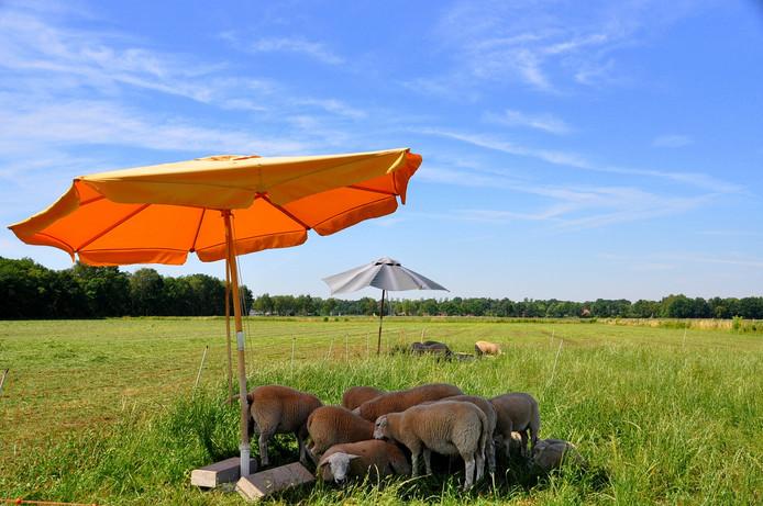 Met veel liefde voor de dieren, onder een tropisch hete zon
